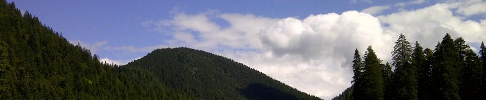 Schwarzentenn2014